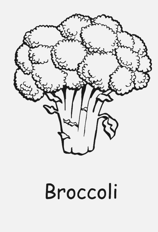 A Healthy Green Broccoli Coloring Page Kids Play Color