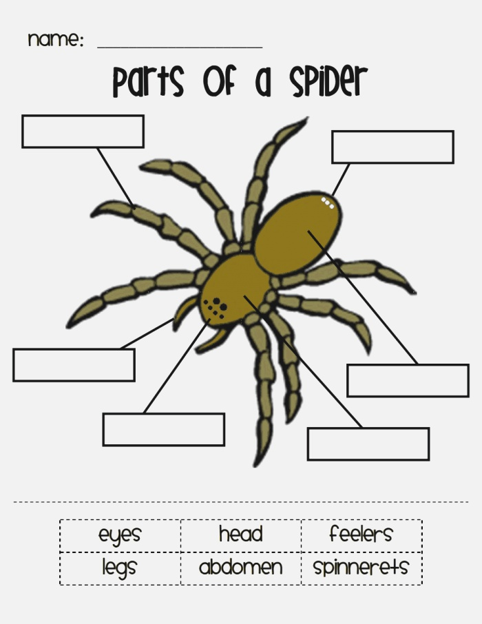 Parts Of A Spider Pdf …