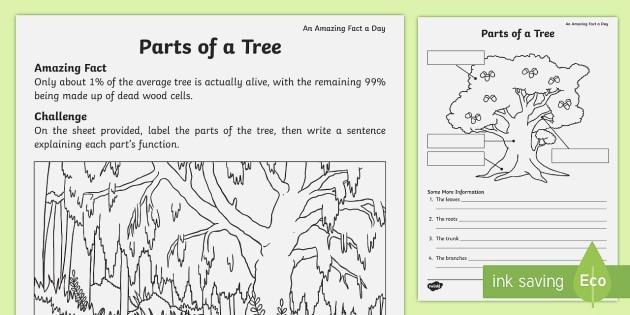 Parts Of A Tree Identify and Explain Worksheet