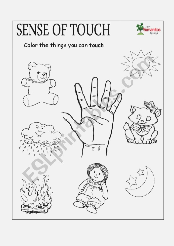 English Worksheets Sense Of touch and Smell