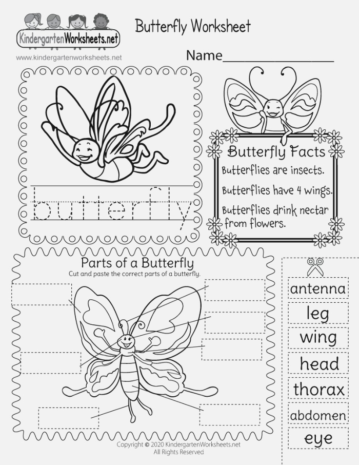 Free Printable Parts Of A butterfly Worksheet