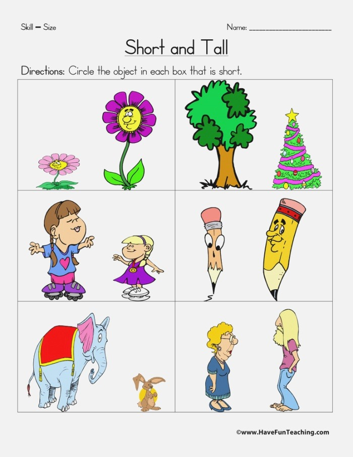 Short and Tall Worksheet