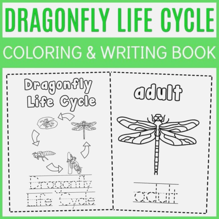 the Life Cycle Of A Dragonfly Coloring Book