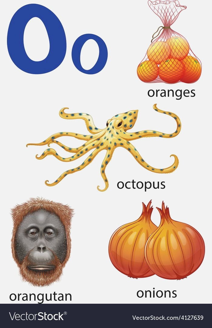 Things that Start with the Letter O Vector Image On