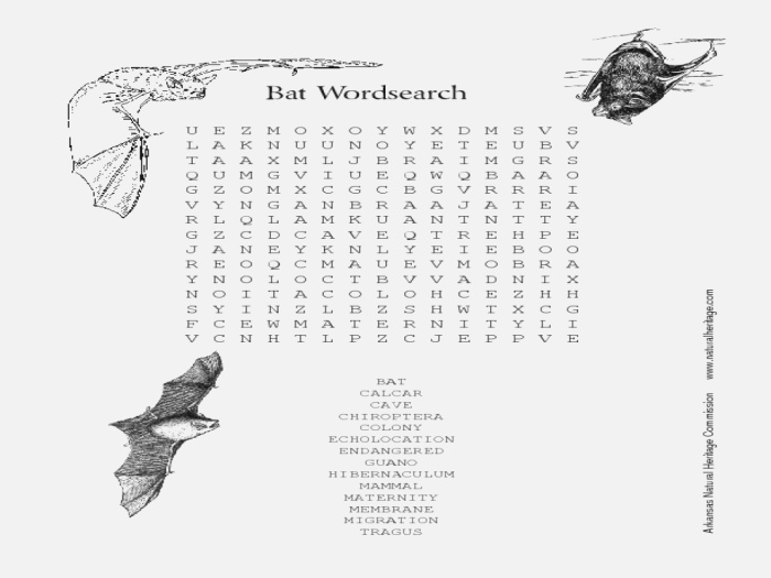 Bat Word Search Worksheet for 2nd 6th Grade
