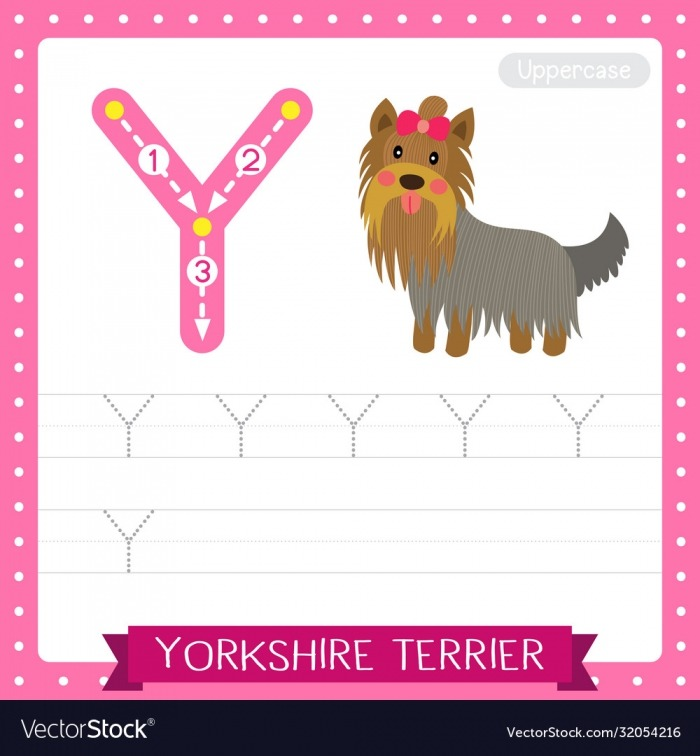 Letter Y Uppercase Tracing Practice Worksheet Vector Image