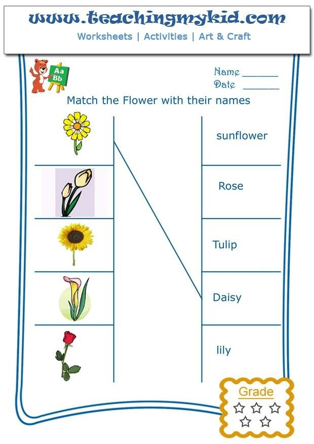 Match The Flowers With Their Name